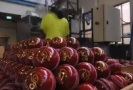 cricket-ballsmaking